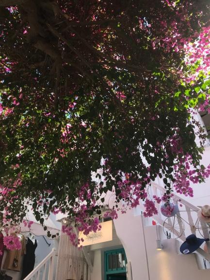 Pink flowers everywhere in Mykonos town